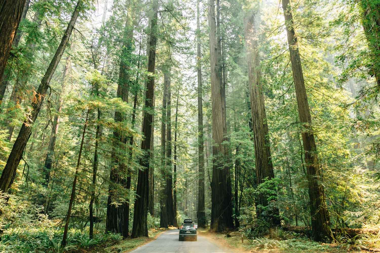 Humboldt-Redwoods