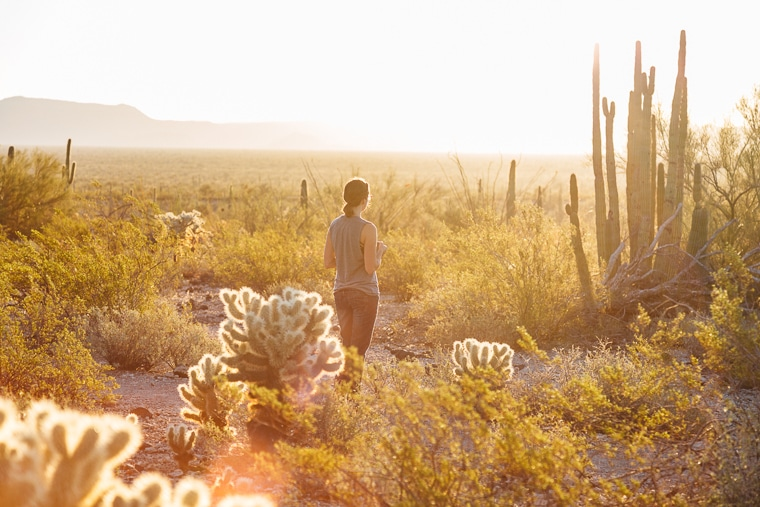 A Guide to Organ Pipe Cactus National Monument
