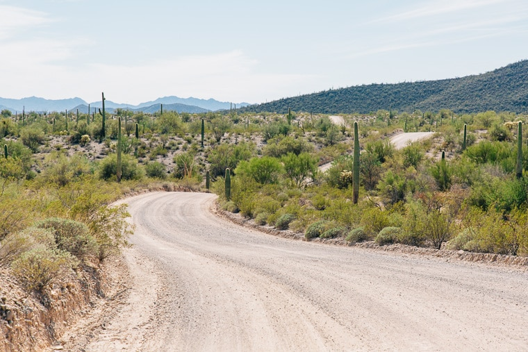 A dirt road in organ pipe cactus national monument