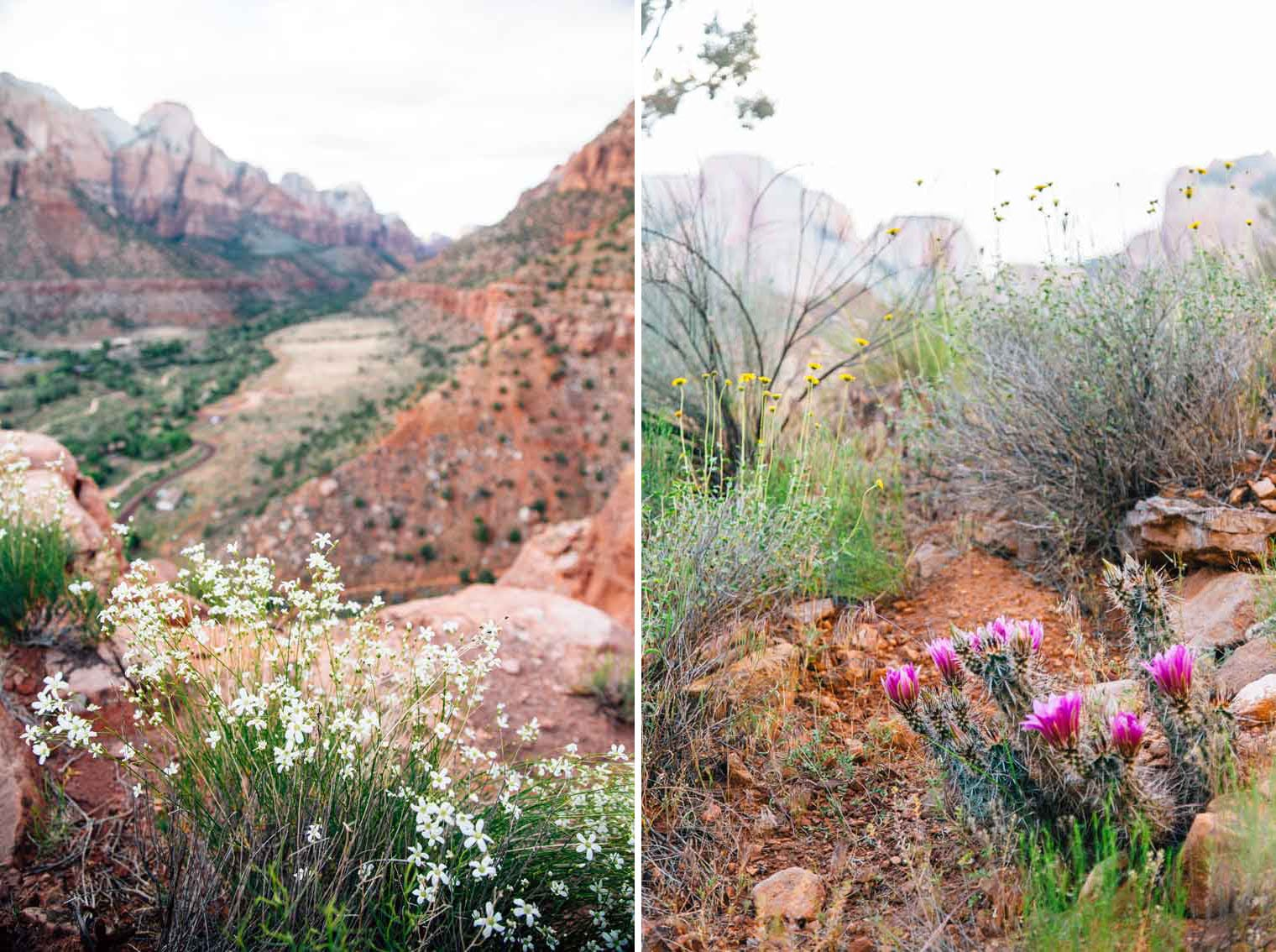 Close up of wildflowers in Zion national park