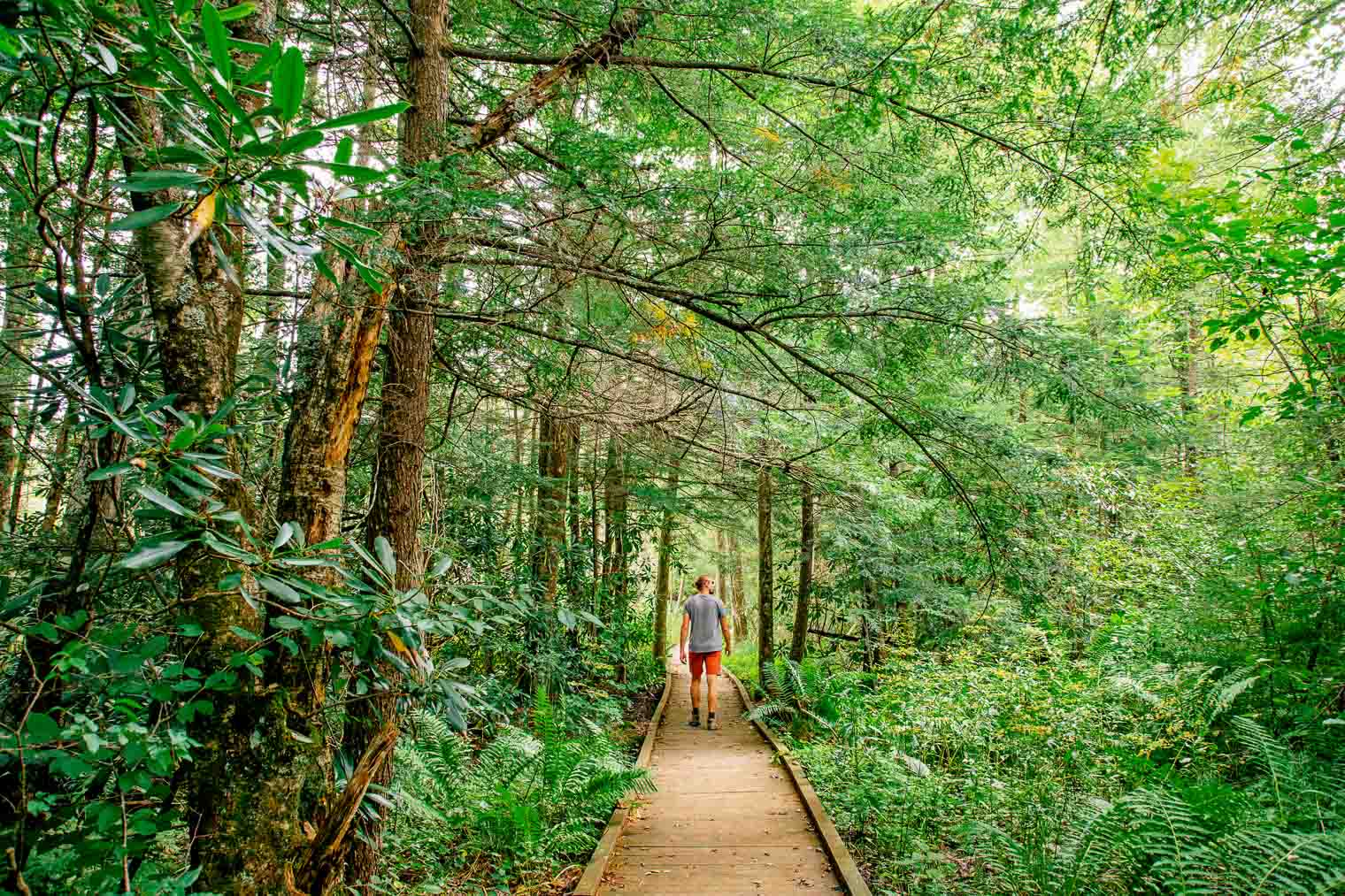 Michael walking on a wooden boardwalk through Cranberry Glades in West Virginia