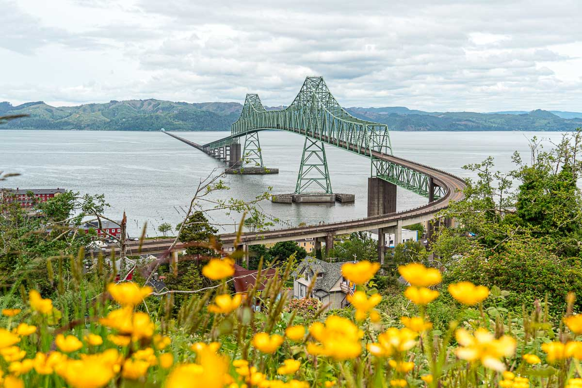 The Astoria bridge stretching over the Columbia River. There are orange wildflowers in the foreground.