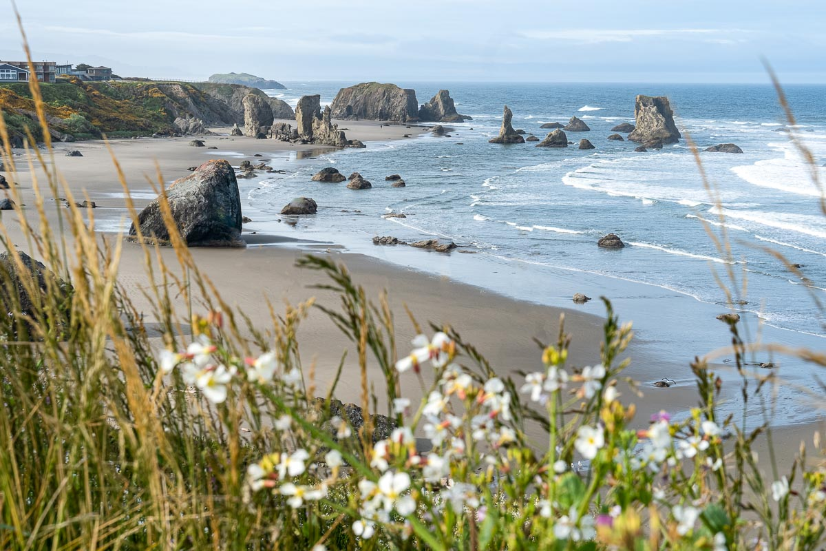 Wildflowers frame a view of a beach and sea stack rock formations.