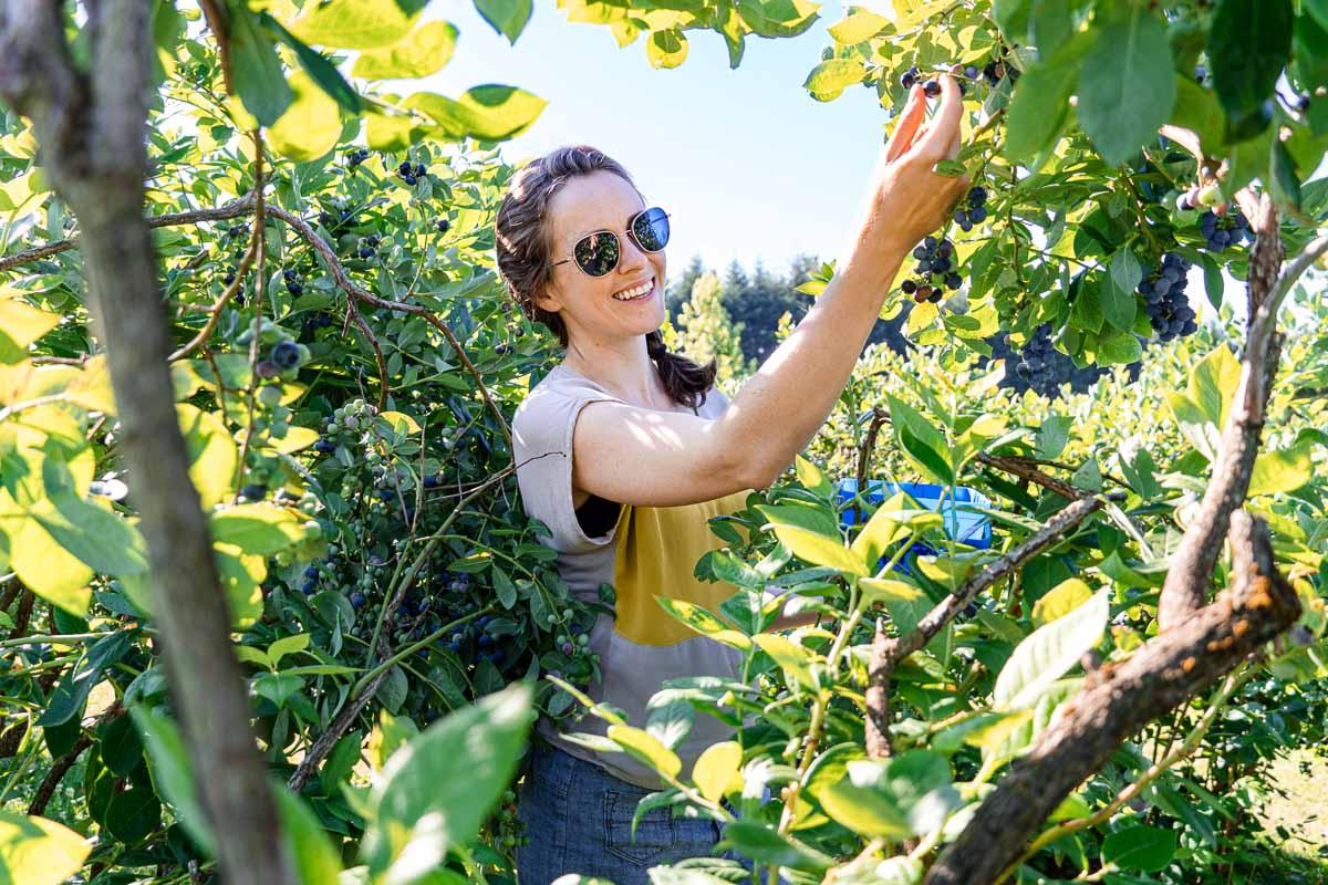 Megan, framed by green leaves, picking blueberries off a bush.