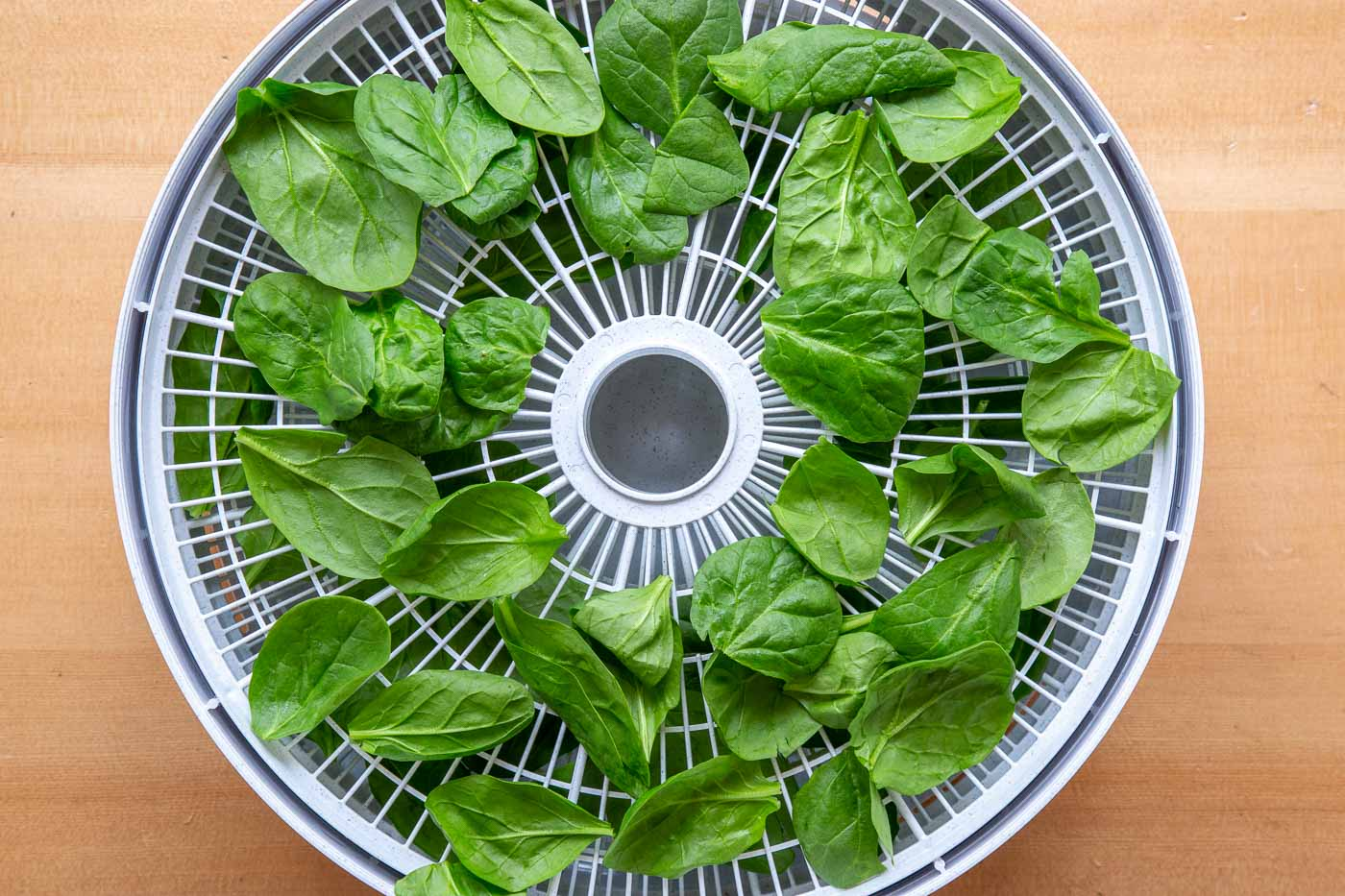 Baby spinach on a dehydrator tray