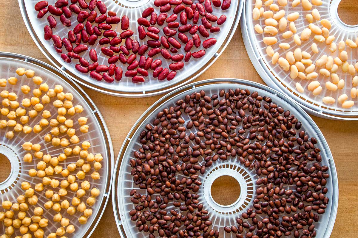 Four types of beans on dehydrator trays