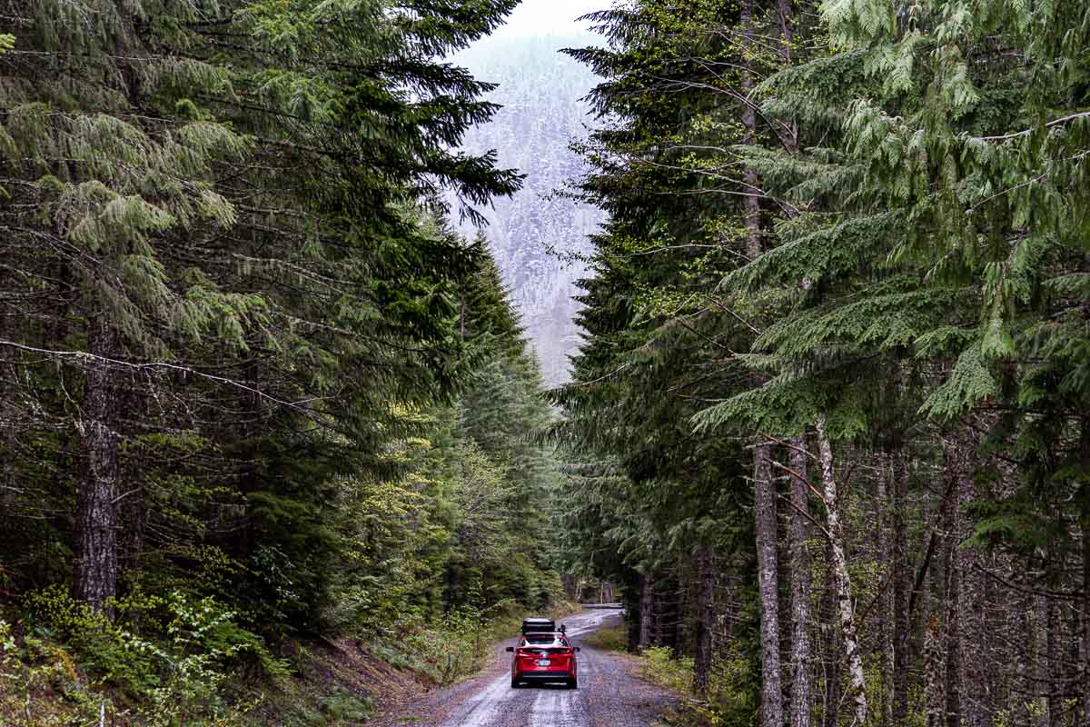 A red Prius Prime driving down a forest road.
