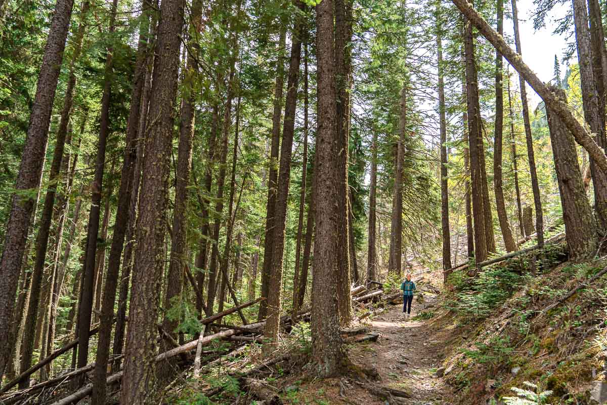 Megan on a hiking trail among tall pine trees.