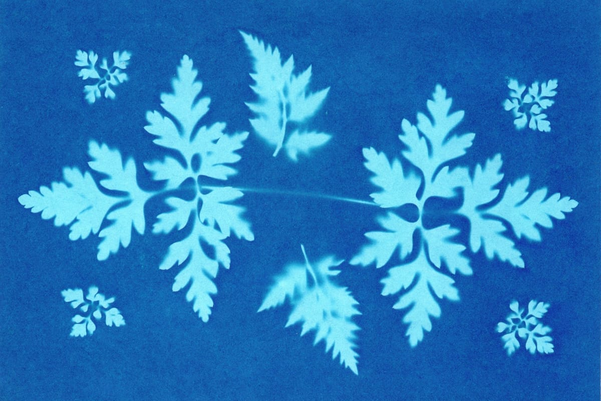 Blue and white sun print of ferns