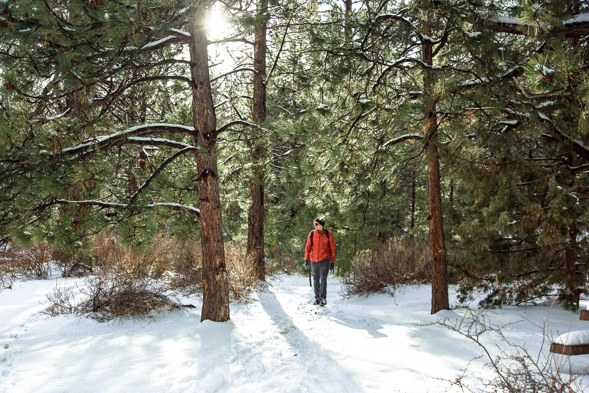 Snow falling as Michael hikes on a trail in a pine forest